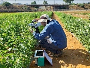 Rom is operating an infra-red gas analyzer (IRGA) sensor to assess gas exchange of sesame plants