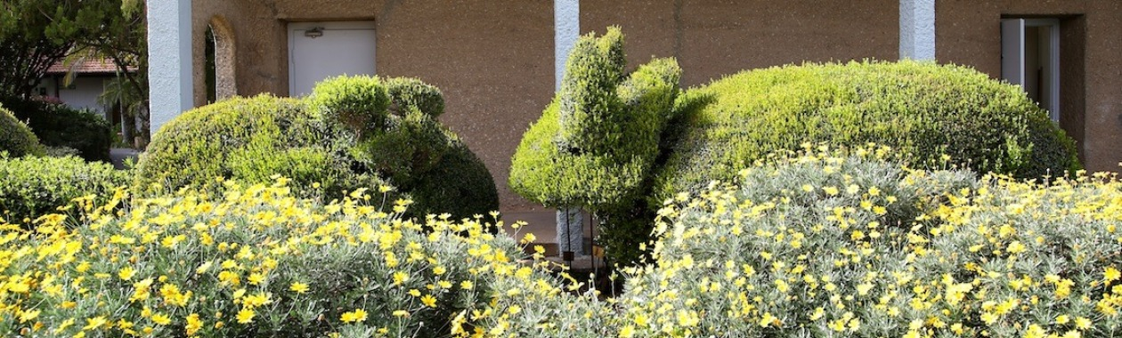 topiary on campus